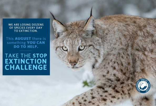 graphic announcing the Stop Extinction Challenge