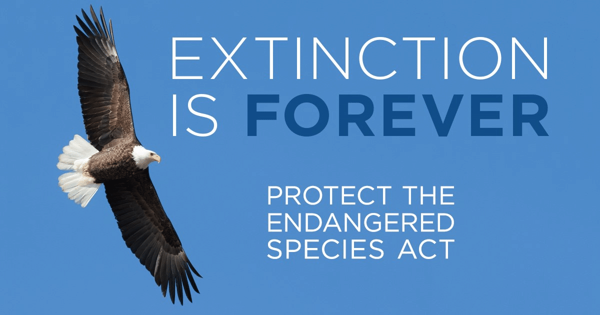 "graphic with bald eagle and text that says ""Protect the Endangered Species Act"""