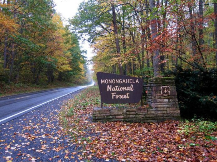 Monongahela-National-Forest-696×522