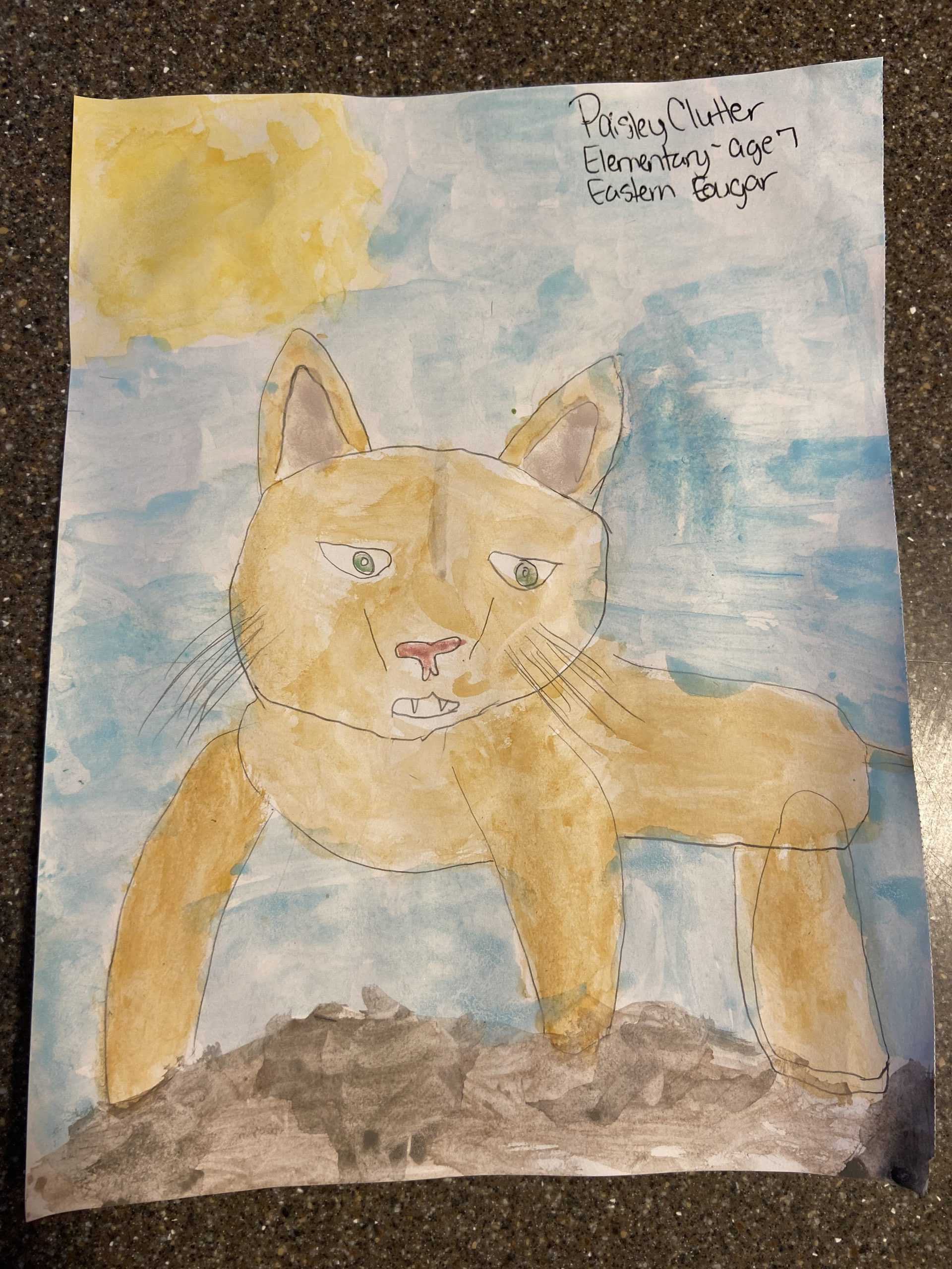 Eastern Cougar 7