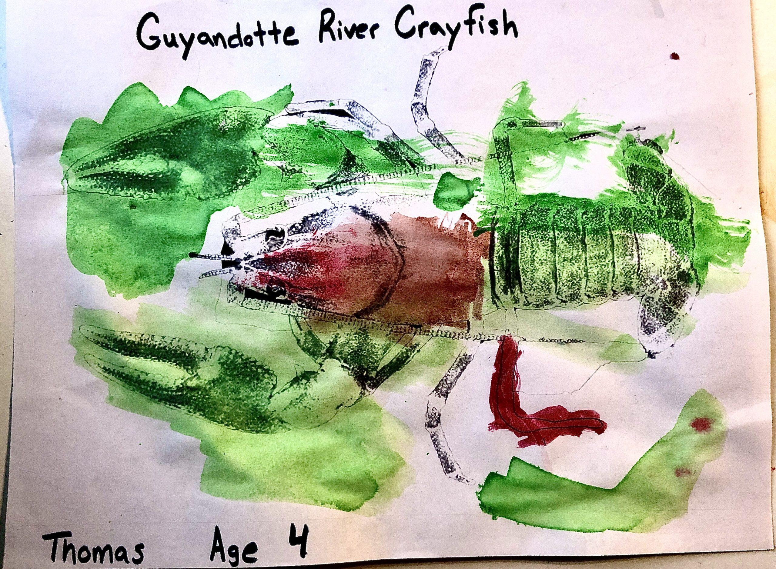 guyandotte crayfish 4