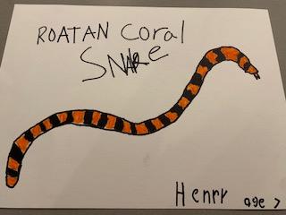 roatan coral snake 6