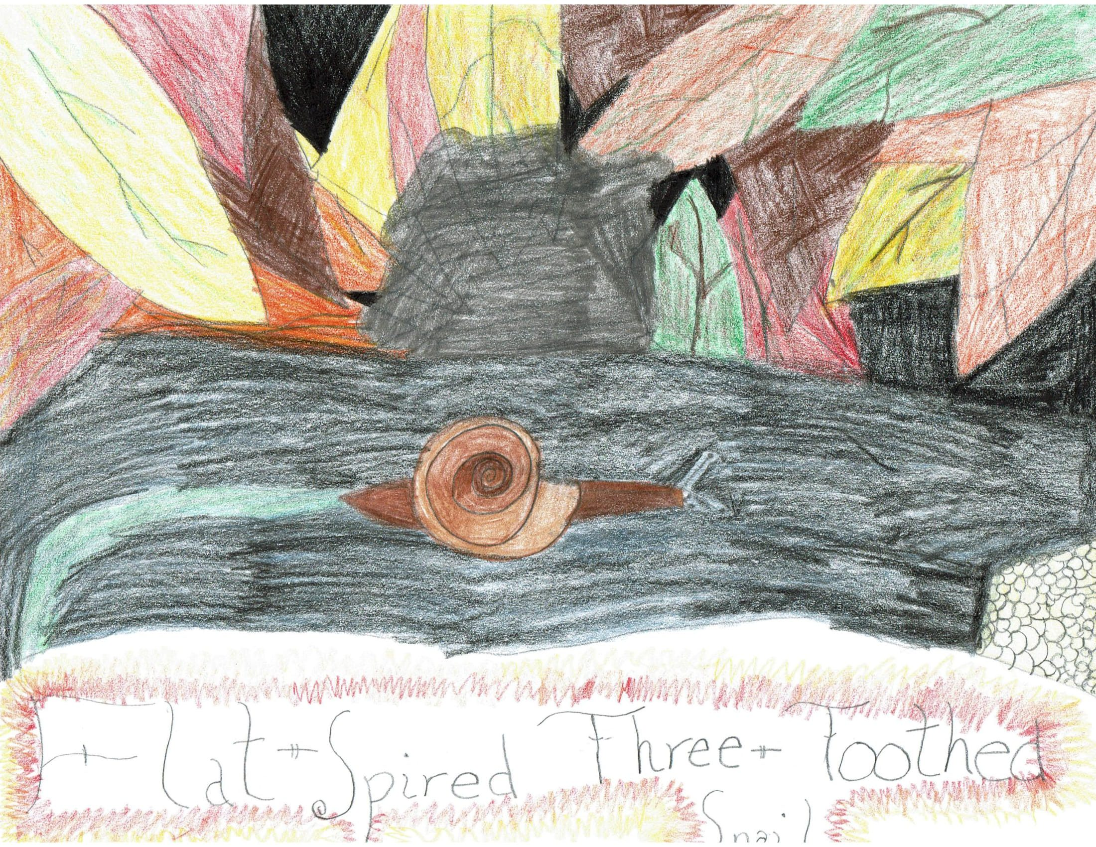 Lauren Worth Artwork Contest-1