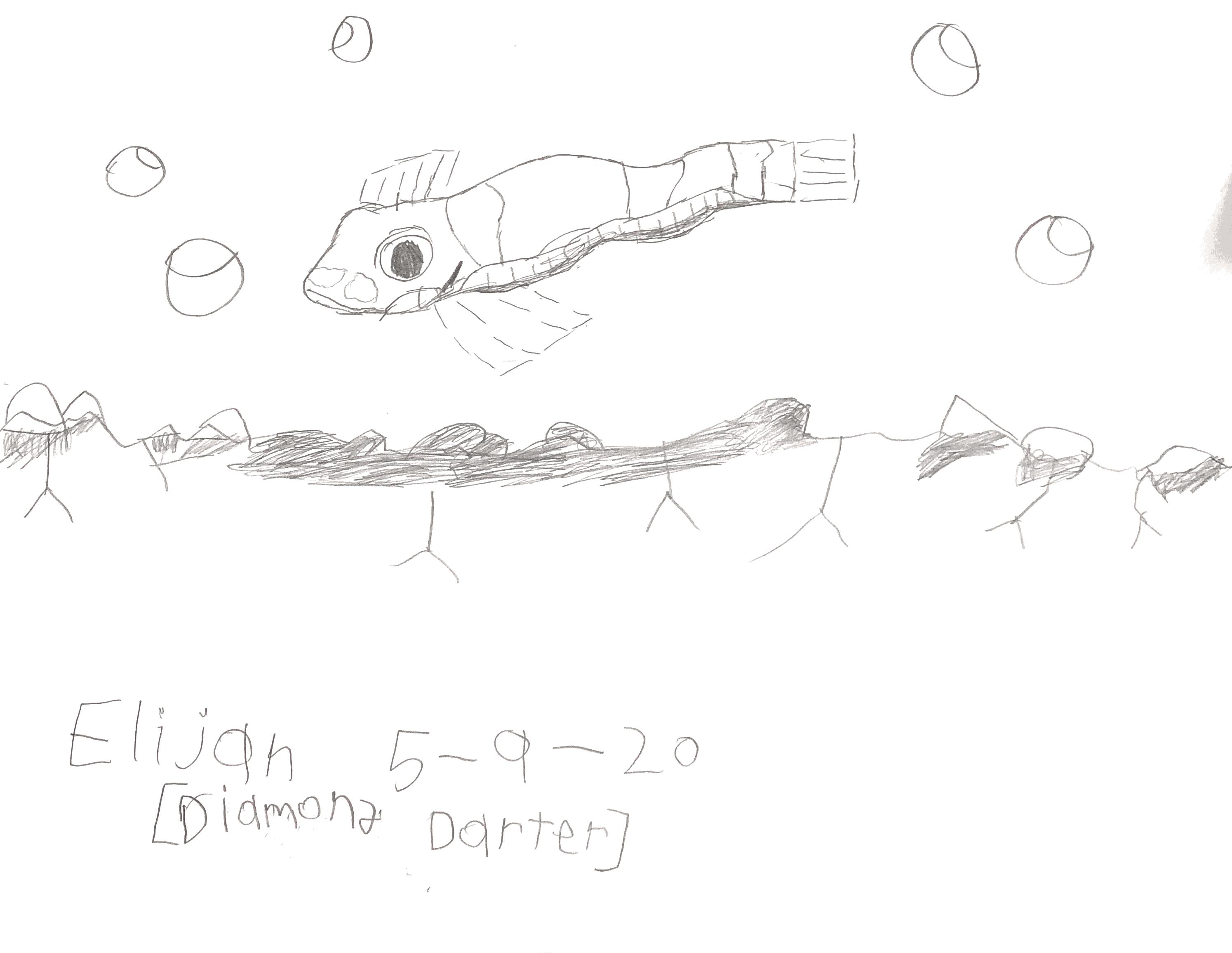 diamond darter 13