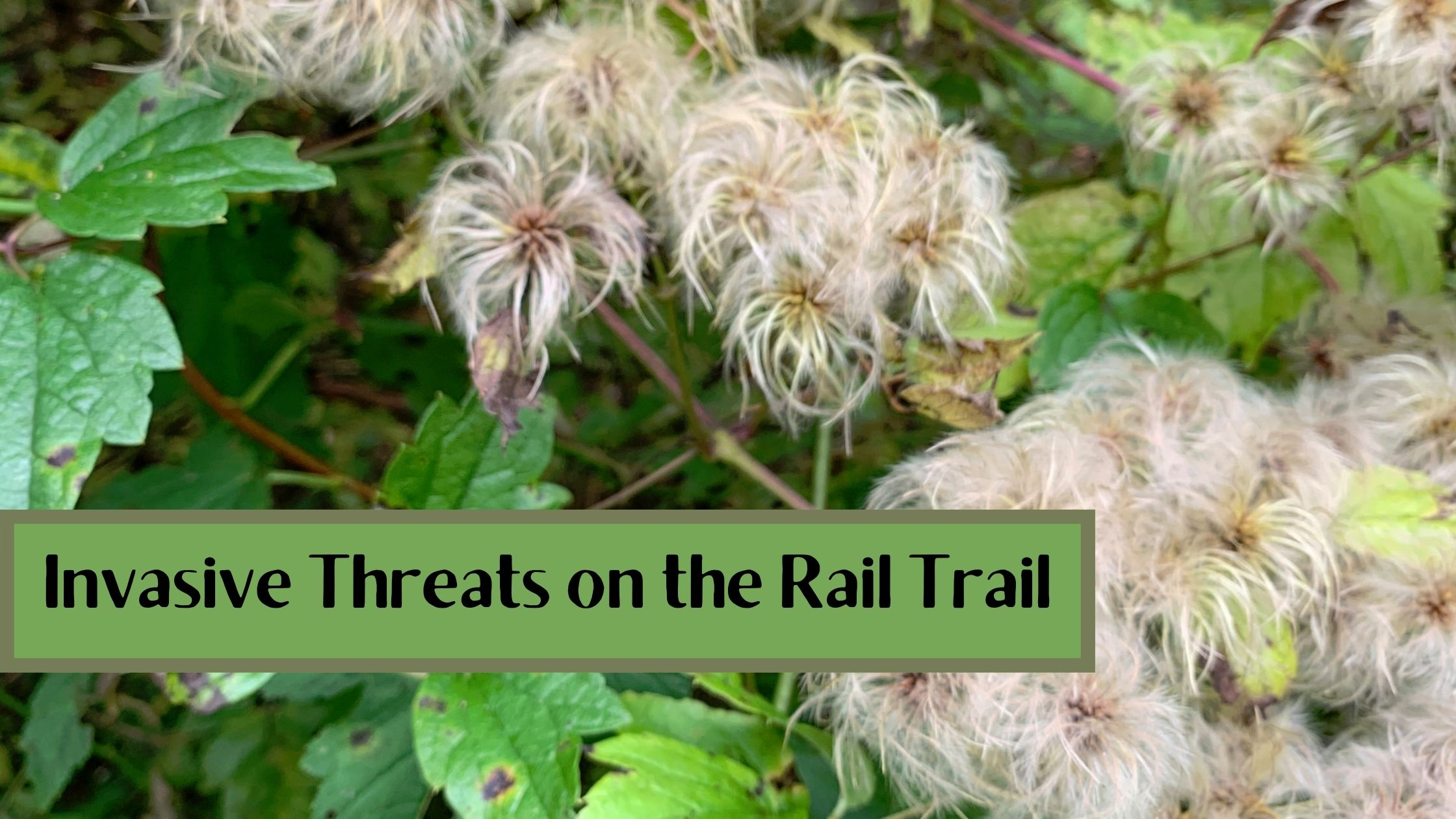 Invasive Threats on the Rail Trail