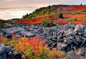 Dolly Sods in the fall
