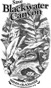 t-shirt with an illustration of a cheat mountain salamander