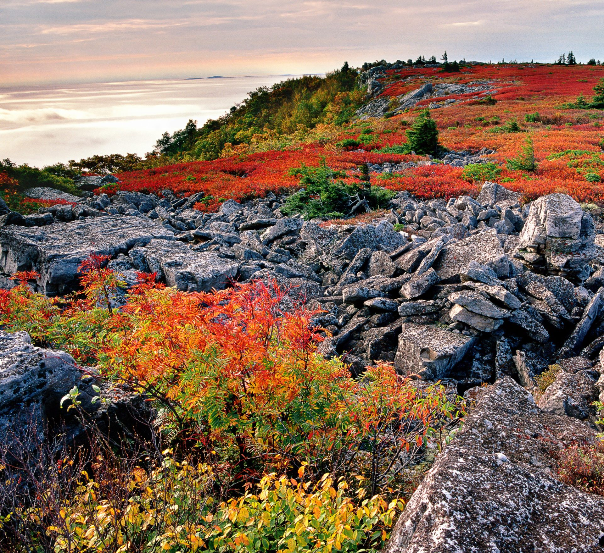 22-A ROUGH AND WILD, DOLLY SODS SCENIC AREA,MNF, WV © KENT MASON