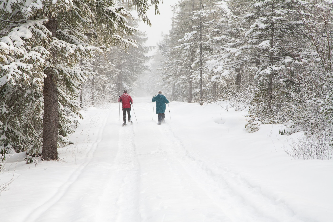 two cross country skiers going down a trail